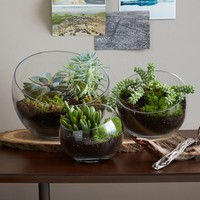 Open-Face Terrariums