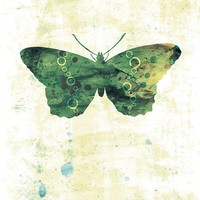 Butterfly Art  Jackie  Butterflies and Moths Series  by papermoth