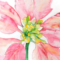 Poinsettia Original Watercolor Painting
