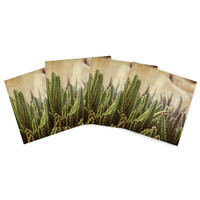 "Jillian Audrey ""Green Grass Cactus"" Green Brown Indoor/Outdoor Place Mat (Set of 4)"