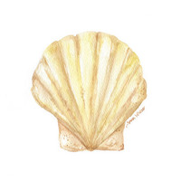 Clam Seashell Watercolor Painting - 8 x 10 - Giclee Print - Beach Art