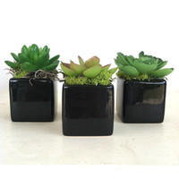 Set of 3 Faux Succulents Black Cube Vase