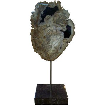 Petrified Wood Sculpture Black Marble Base