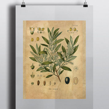 Flowering Olive Branch Kitchen Wall Art Printable