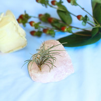 Air Plant Rose Quartz Crystal