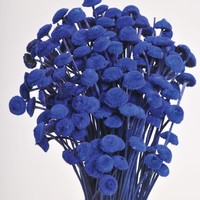 "Blue Dried Floral Buttons Bundle - 18"" Tall"