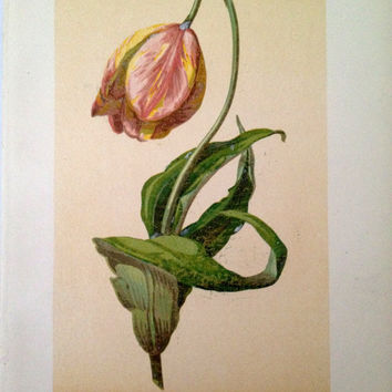 Tulip Print  Vintage Dutch Tulpe Print by CasaAndCo on Etsy