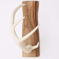 Antler Wall Hook