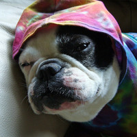 Tye Tie Dye Cotton Hoodie T Shirt French Bulldog Pug Boston Terrier Multicolored-Carla Smale