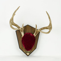 Vintage Mounted Deer Antlers on Plaque with Red Velvet