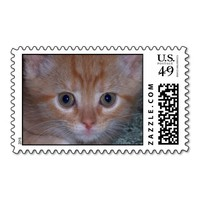 Cute Kitten Postage Stamps