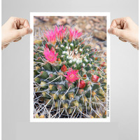 Pink flowering Ball CactusPhotography/ OPEN EDITION prints / Desert plant photography and cactus flower Photography / Pink, green