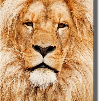 Head of African Lion Picture on Acrylic , Wall Art Decor Ready to Hang!.