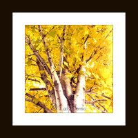 Large wall art - yellow and grey nature photography, 16 X 16 wall hanging, grey home decor, color photography, home decor wall art