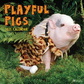 Playful Pigs Wall