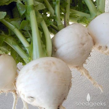 Shogoin Japanese Turnip Heirloom Seeds - Non-GMO, Open Pollinated, Untreated