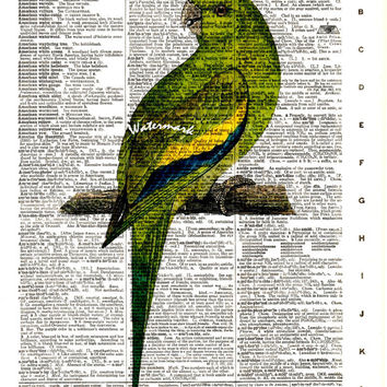Canary Winged Parakeet, Conure - South American Bird - Vintage Dictionary Art Print - Page Size 8.5x11