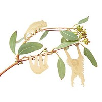 Plant Hanging Animals | Plant Accessories, Sloth, Orangutan, Chameleon