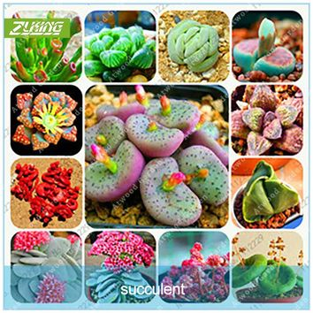 ZLKING 200 Pcs Bonsai Flowers Indoor Fleshier Plant Lithops Stone Flowers Succulent Seed Bonsai Cactus Plant