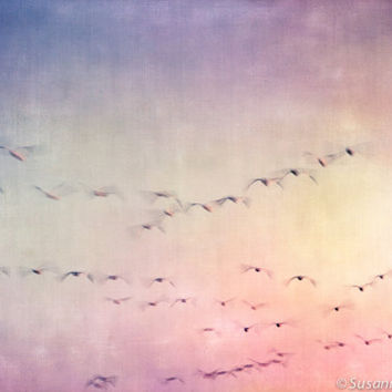 Nature Photography, Spirit Birds in Sky, Fine Art Print, Dreamy Soft Pastel Colors, Magical Fantasy Abstract, Wall Decor for Children