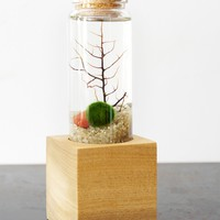 Natural Bottled Terrarium Kit