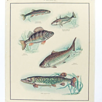 Vintage School Chart, Freshwater Fish Poster,  Home Decor, Gift for Fisherman, Housewares,  Macmillans Nature Class Pictures