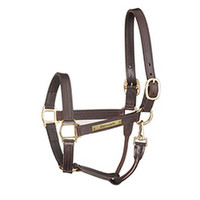 Perris Track Style w/ Snap Leather Show Halter with Engraved Plate