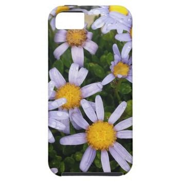 Daisy Flowers, White Yellow Flower, Nature Daisies iPhone 5 Cover