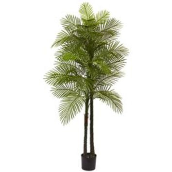 Double Robellini Palm Tree in Pot