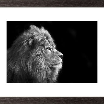 Portrait Of Male Lion On Black