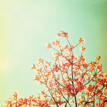 "Nature Photography, orange mint green turquoise nursery photo peach dogwood tree branches spring print teal wall 24x24 Photograph, ""Whimsy"""