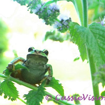 Prince Charming- Pacific Northwest Tree Frog- Garden Frog- Green Amphibian- Nature- Pond Life- 8x10- Digital Image- Desktop Background