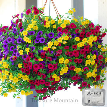 Heirloom Hanging Petunia Mixed Seeds, Professional Pack, 200 Seeds, Very Beautiful Garden Flowers Light Up Your Garden TS029