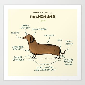 Anatomy of a Dachshund Art Print by Sophie Corrigan