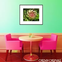 Flowering Globe Artichoke - Pink and Green Fine Art Photography Food Print