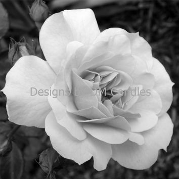 Single black and white rose wall hanging, inspirational wall art ready to frame, home or office wall art, downloadable photo print, rose art