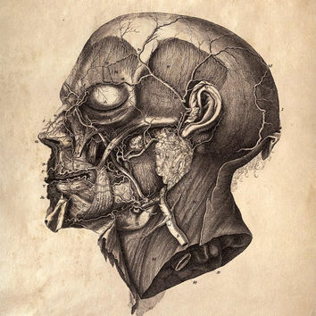 11x14 Vintage Anatomy Human Body Facial Muscles by curiousprints