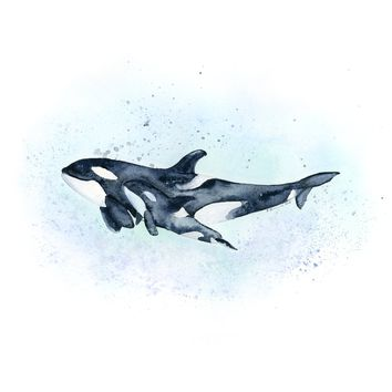 Mom and Baby Killer Whale Print
