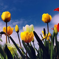 'Relax With The Tulips' by Karen Stahlros