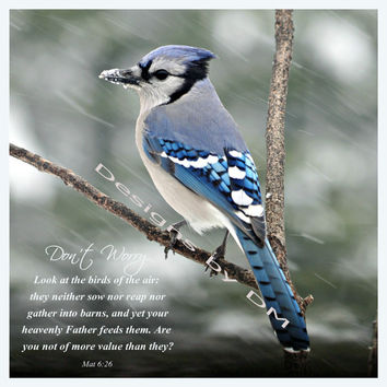 Matthew 6:26 and blue jay, inspirational wall art ready to frame, home or office wall art decor, downloadable poster prints, printable arts