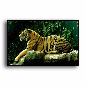 SR--0491 Bengal Tiger Natural Scenery Animal. HD Canvas Print Home decoration Living Room bedroom Wall pictures Art painting