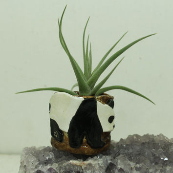 Panda Mini planter for Air Plant and moss Miniature planter