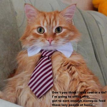Cute Cat Tie Collar - Very Smart Looking Educated Cat