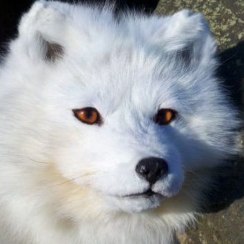 Soft Sculpture Taxidermy - ARCTIC FOX - Custom made for buyer
