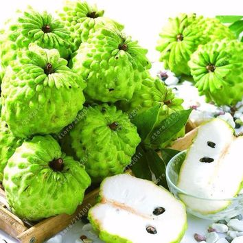 10pcs/bag Sweetsop Fruit Seeds Custard Apple Buddha's Head Fruits Cherimoya Sugar Apple Annona Tree seeds 100% true seed