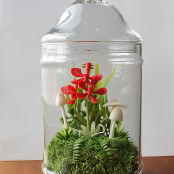 Miniature Red Vanda Orchid Faux Terrarium - Mother's Day