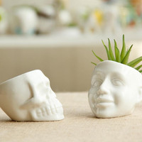 White Ceramic Cool Skull Capita Plants Potted Small Flower Pot Planter Succulent