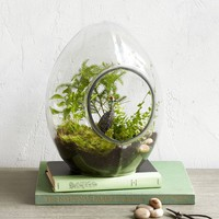All-Glass Terrariums