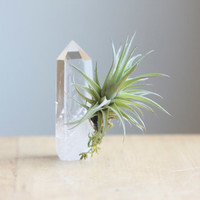 Air Plant, Tillandsia, on Quartz Crystal Point, Eco Home Decor