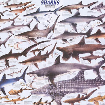 Sharks Animal Education Poster 26x37